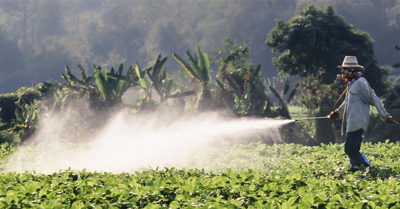 Culturi moderne tratate cu pesticide chimice
