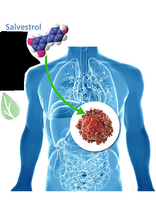 Salvestrol tratament naturist cancer - Hypernatura