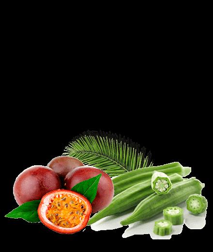 Vitamunda-cura de detoxifiere si slabit -ingrediente