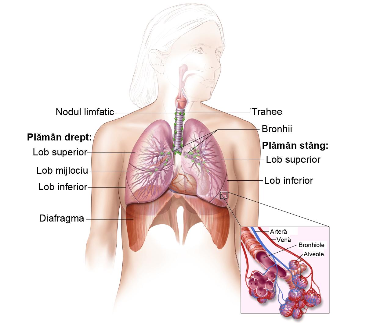 Cancerul pulmonar: cel mai mortal tip de cancer din lume | printreoale.ro