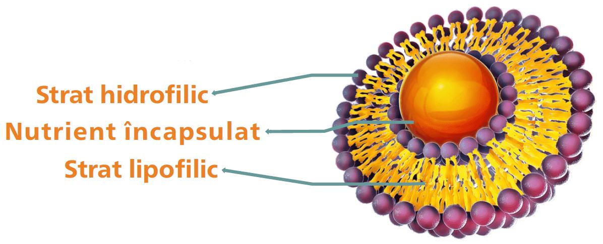 Lipozomal Curcumin structură