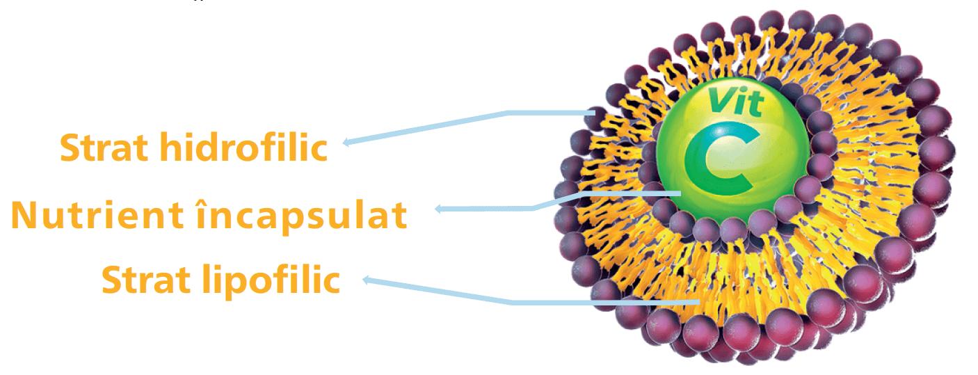Lipozomal Vitamina C structură